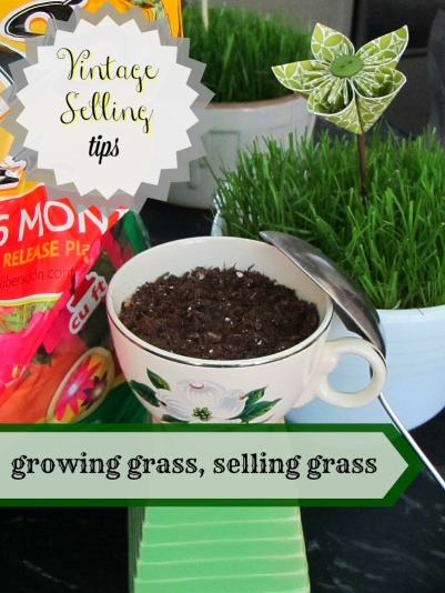 growing grass in a vintage cup