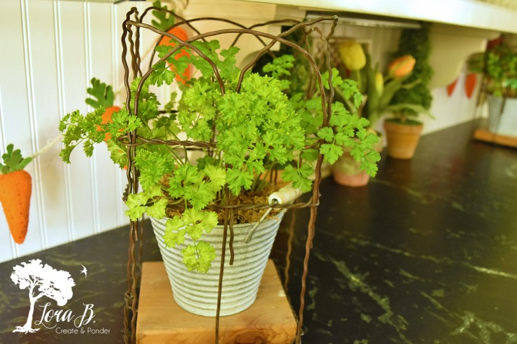 Parsley in galvanized pot