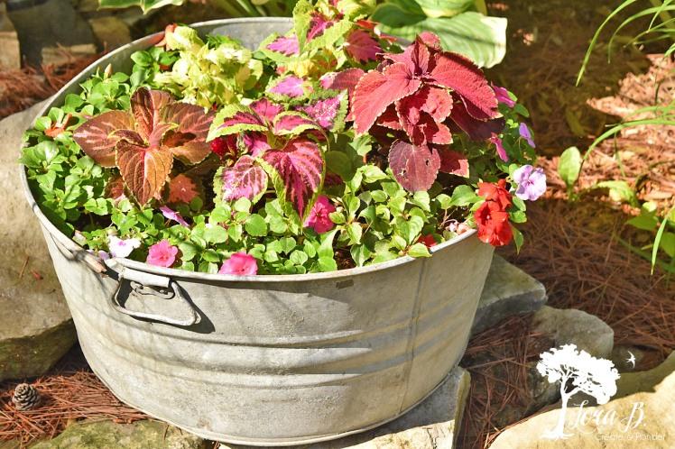 flowers in galvanized bucket.