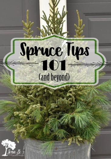 Spruce Tips 101 and beyond.