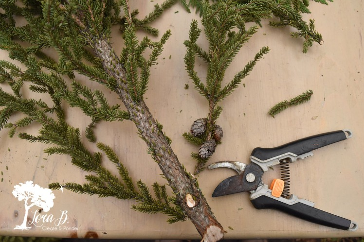 """Snip off bottom 5"""" of branches from spruce tips."""