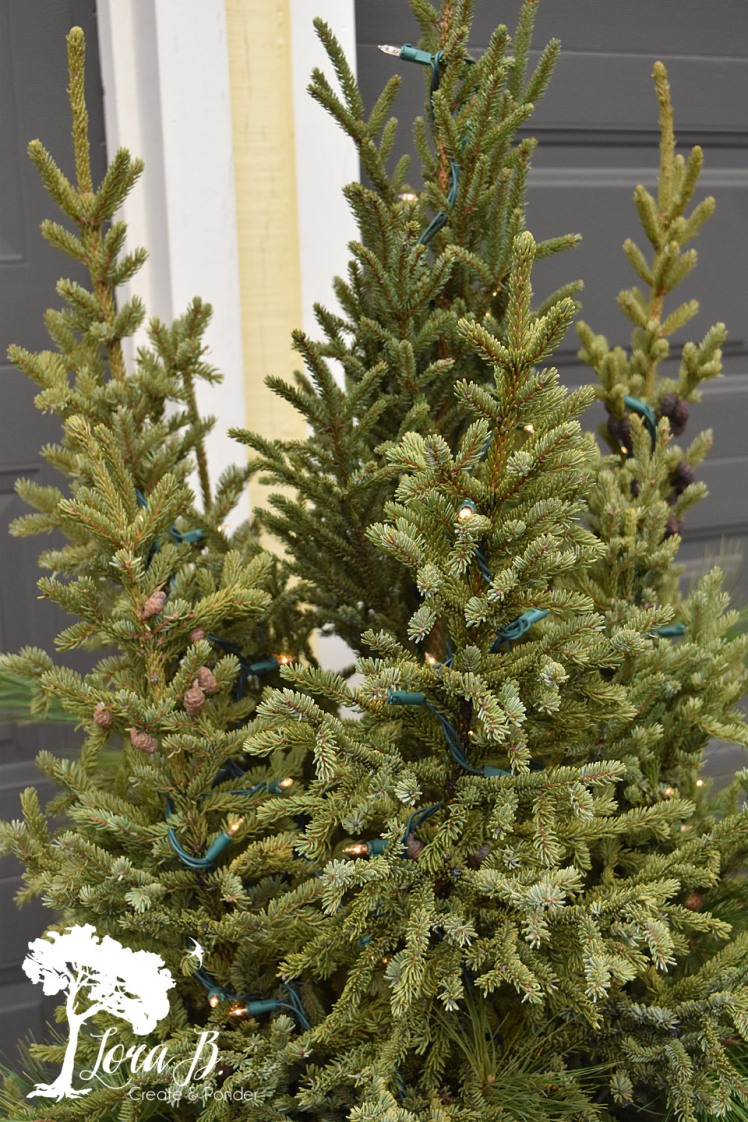 Place the lights on your spruce tips before any other decorations.
